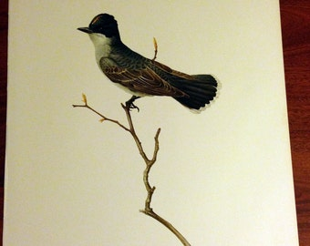 JF Lansdowne Print Book Plate Art, Eastern Kingbird