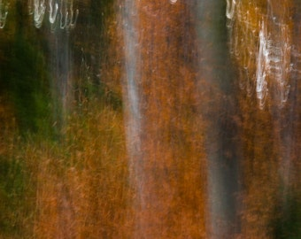 Forest Photograph, Woods, Trees, Abstract, Michigan, Traverse City, Tree Art, Orange, Green, Red
