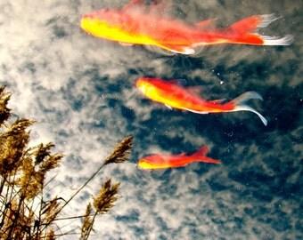 Surreal Koi Pond Reflection Photo Prints