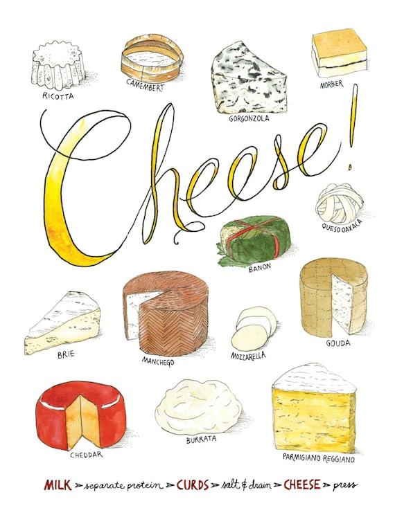 Types Of Cheese Watercolor Art Print Illustrated Varieties