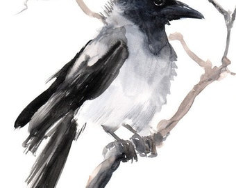 Crow, Original watercolor painting, 9 X 12 in, black and white crow lover art, raven, European Gray Crow