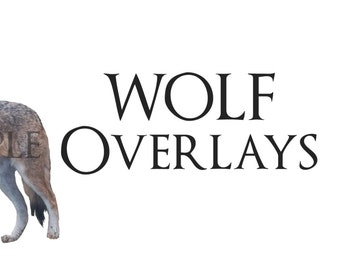 Real Wolf Png Photoshop Files