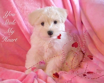 Valentine Puppy Photo, Romantic Gift, Stole My Heart, Baby Animal Photography Girl's Nursery Decor Love Sweet Quote Typography Pink Wall Art