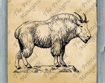 Mountain Goat Digital Download for collages fabric iron on T-shirt transfer burlap pillows DIY Vintage image Instant printable Goat Clip Art