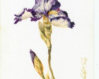 Flower by Sergey Zinoviev