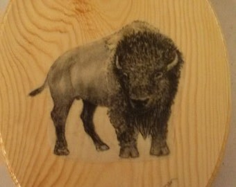 """Buffalo on oval wood plaque 8.5x11.5"""" , applied drawing, gloss finish"""