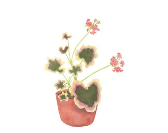Geranium Plant in a Clay Pot Original Botanical Watercolor Painting