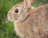 Rabbit Portrait, Animal Photography, Wildlife Art Print, Woodland Wall Decor, Nursery Decor, Woodland Animal, Nature Photography