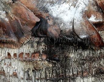 Tree Bark Nature Photography, Black Modern Art, Palm Tree Print, Tropical Decor, Brown Abstract Art, Abstract Print, Large Rustic Wall Decor