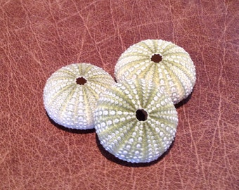 "3 Green Sea Urchins 2""-2.5"" - Airplant Shell - Beach Wedding Decor - Bulk Shells - seashells - sea shells"