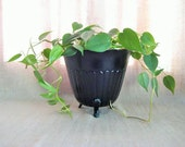Painted Black Planter / Upcycled Brass Planter / Painted Traditional Planter/Pot in Chic Black