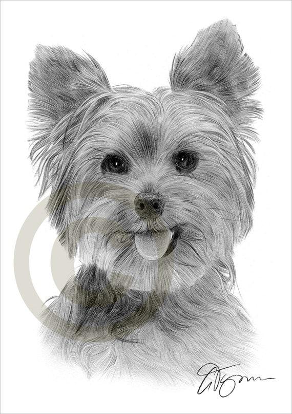 Matita di cane yorkshire terrier toy disegno opera di for Cane disegno facile
