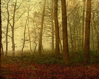 Autumn light; Fine Art Photography - autumn, forest, nature, landscape, certificate of Authenticity, trees, fog, hologram, wood, winter
