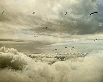 Nature, Fine Art Photography, Sky, Heaven, Clouds, Seagulls, Birds, serene, Landscape, Sandra Röken, Skeeter, texture, hologram, wall art