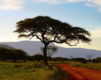 Kenya Photography - Kenya Landscape - Kenya Gift - Kenya Print - Countryside - Tree print - Colour - Road - Wall Art - Kenya Decor - Horizon