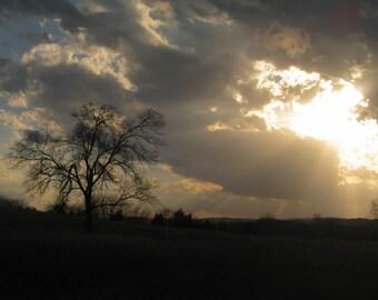 9x12 Lone Tree in Evening Sun