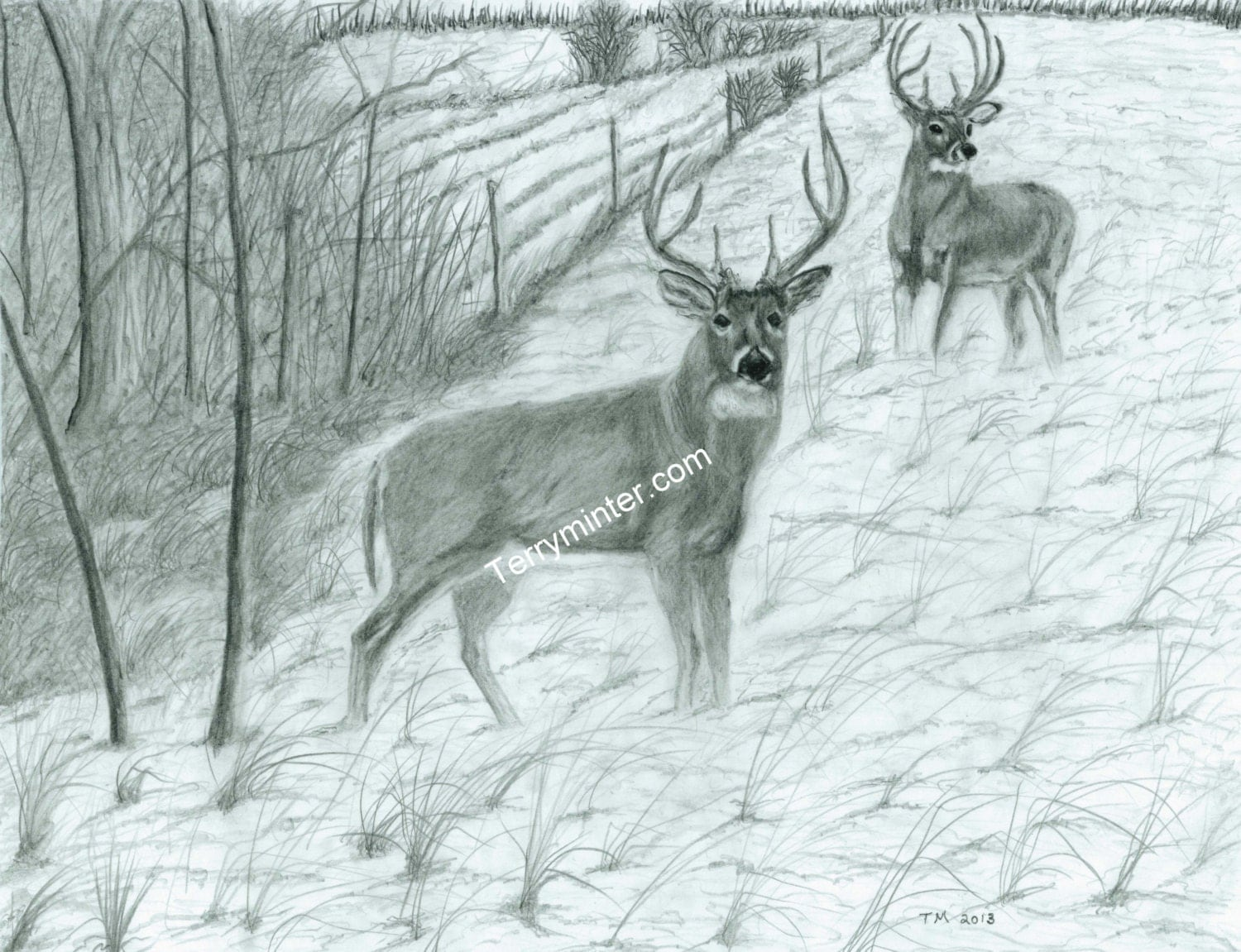 Pencil drawing print Whitetail Deer bucks on by TerryMinterArt