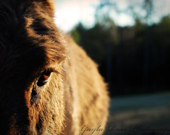 Donkey Photography, Farm Animal Photo, Brown, Eye Photography, Rustic, Farm Life, Country,Nature,Animal Portrait,Donkey Eye,Ranch,Barnyard,
