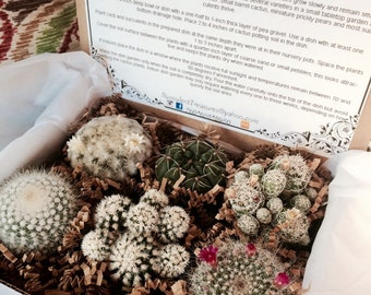 Succulent Treasures Cacti Box. Half Dozen Assorted Premium cactus gift box