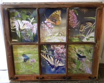 butterfly photos in window frame