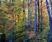 Blue Trees of the Early Morning - Pocahontas State Park Virginia