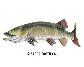 Musky Fish Decal Sticker