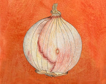 ONION PRINT, ONION Art Print, From My Original Prismacolor & Ink Painting