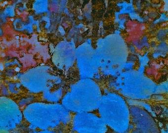 Colorful Floral Wall Art, Crabapple blue, Original Photo Transfer, [7 x 8.5]