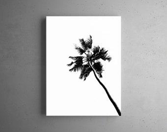 Black palm tree silhouette on white background. Print.