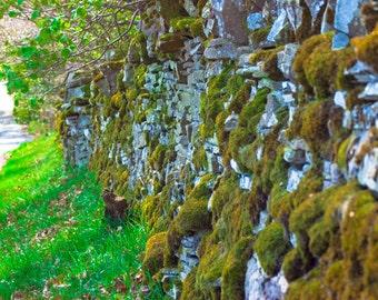 Forfar Wall, Scotland Photography, Stone Photography, UK Photography, Moss Photography, Countryside Photography, 8x10 Canvas Print, Vintage