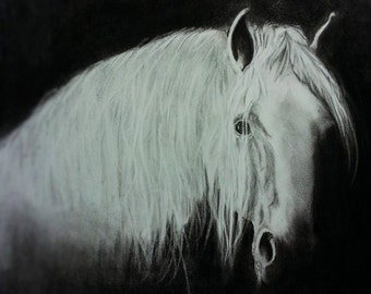 "White Stallion in Shadows, black and white 9.5"" x 12"" glicee art print"