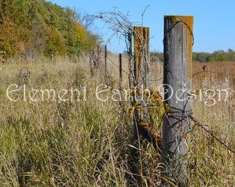 Fence line, Instant Download, 11x14, Digital Printable, Fine Art Digital Photo, Photography, landscape, barbed wire fence, grapevine