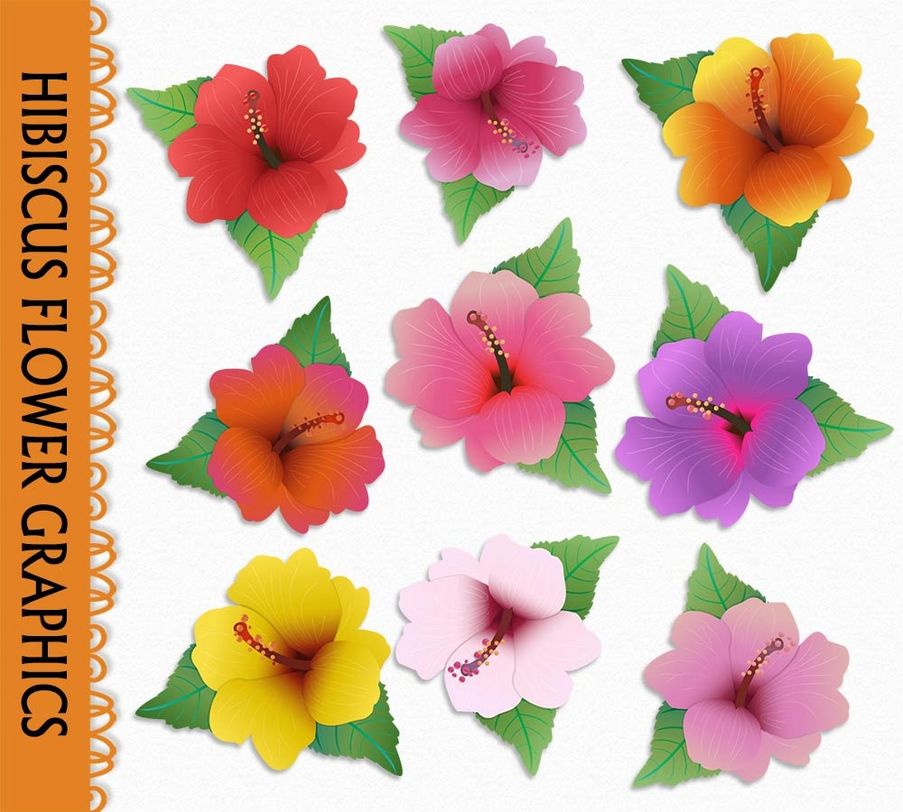 Hibiscus flower clipart image hibiscus flower -  Zoom