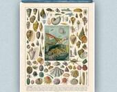 Mollusks Print, Vintage Seashells Octopus Squid French Antique illustrations, Sea life and Nautical art,  seaside beach cottage decor
