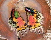 Rainbow Glow - Real Sunset Moth & Beetle Wing Earrings
