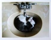 Tuxedo Cat Cards - Tuxedo Cat in Sink - Blank Note Cards - Gift for Cat Lover - Tuxedo Cat Stationary