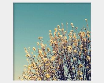 Cherry Blossoms Photo, Flowering Tree Photo, Spring Photograph, Teal White Photo, Aqua White Photo, Flowering Tree Art, Nature Wall Art
