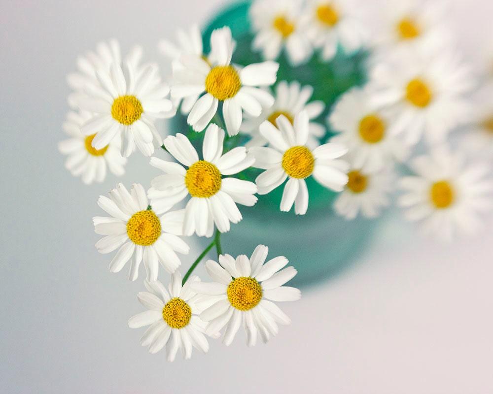 White Daisy Art Floral Art Print White Turquoise Wall Decor