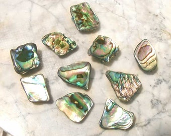 Magnets with New Zealand Paua/Abalone Shell 5ea Refrigerator Office Magnets Sg221/5