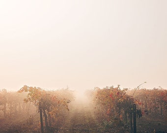 Vineyard Photography, Wine Country Photo, Winery Decor, Rustic California Decor, Foggy Sunrise, Winery Decor, Large Wall Art