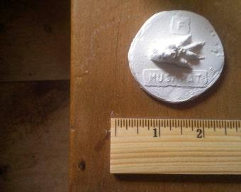 animal tracks: muskrat plaster cast (naturalist / natural study)