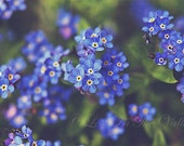 Flower Photography, Floral Home Decor, Nature Photograph, Forget Me Not Photo, Spring Flowers, Fine Art Print, Dreamy Picture, Blue, Green