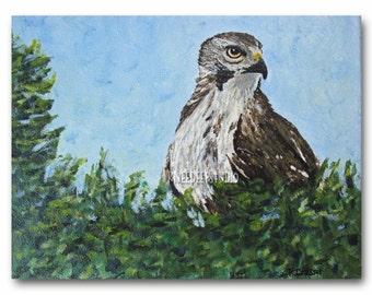 Hawk Painting Bird of Prey Acrylic Art on 8x10 Canvas Contemporary Fine Art Wildlife Portrait Nature Scene Rustic Wall Decor for Man Cave