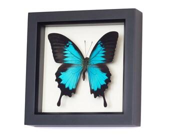 Butterfly Wall Art Framed Butterflies Swallowtail Display