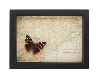 Old Framed Map of North Carolina With Native Butterfly
