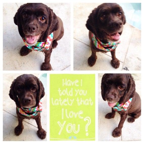 graphic print pet scarf puppy pets collar bandana by