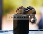 Photographof a  Chipmunk In Cup - Cute Chipmunk Photo- Chipmunk Photo