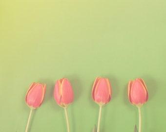 Tulips on Green - Square Springtime Orange Flowers on Green Home Decor Nature Photograph Print