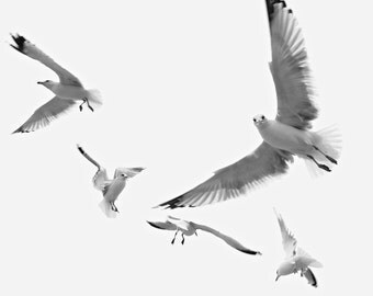 Welcome to the Ocean - Seagull in flight Big ocean seashore breeze fly with me in flight wall decor wall art Beach house color photography