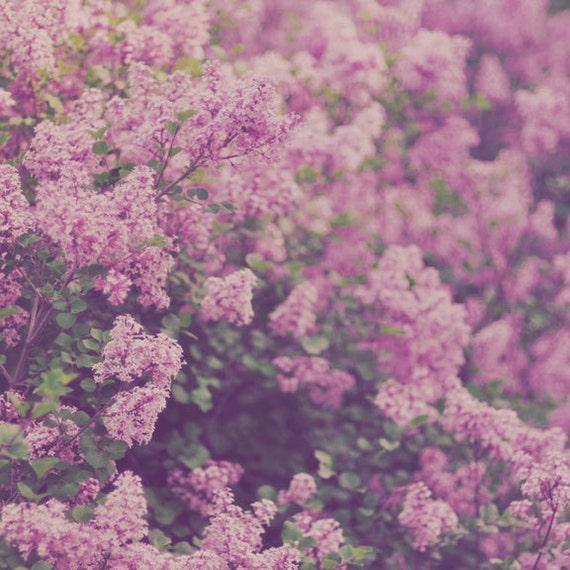 Lilacs Photograph, Flower Photography, Purple Home Decor, Shabby Chic, Spring, Bedroom Art, Nature, Vintage Colors, Retro Photograph
